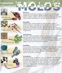 mold in your bedroom symptoms risk