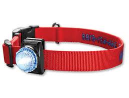Led Safety Dog Collar Light Orvis