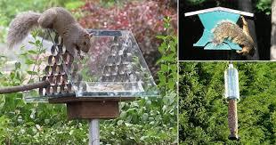 8 Diy Squirrel Proof Bird Feeder Ideas Balcony Garden Web
