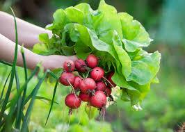 7 veggies to plant now garden club