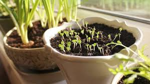 grow vegetables from seed