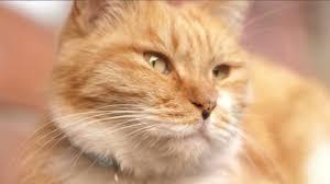 Festa del Gatto, perché solo in Italia si celebra il 17 febbraio ...