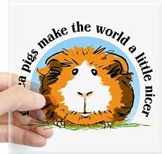 Amazon Com Cafepress Guinea Pigs Make The World Sticker Square Bumper Sticker Car Decal 3 X3 Small Or 5 X5 Large Home Kitchen