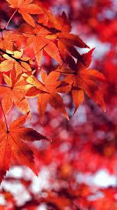 fall leaf red mounn bokeh iphone 7