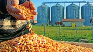 Huge potential' in SA's agro-processing industry