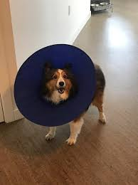 dog cones alternatives to the cone of