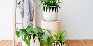 How To Keep Potted Plants In Great Condition Bunnings Warehouse