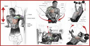 full storage chest workout routine for