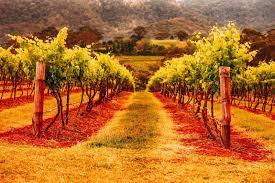 Hunter valley winery ...