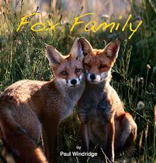 fox family book the fox project