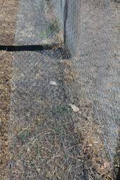 Blog Building A Snake Proof Fence Dog Proof Fence Dog Fence Dog Yard