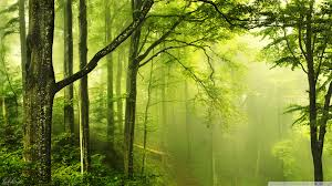 25 hd green forest wallpapers on
