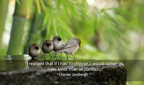 Bird Quotes - Quotations about Birds - Famous Quotes - Funny Cartoons