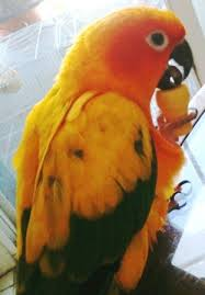 bird cage cleaning tips for sun conure