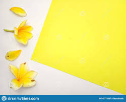 close up yellow background frangipani element design for