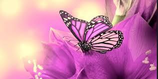 The Purple Butterfly The Purple Butterfly Is En An Emblem Of By Mk Ansari Muslim Mental Health Collective Medium