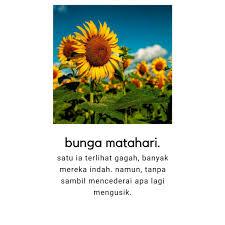 belajar dari bunga matahari bunga matahari matahari bunga