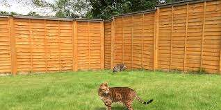 4 Cat Fence Solutions For Your Backyard Oscillot North America