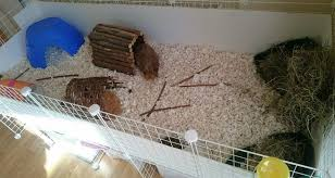 amazing guinea pig homes the reading