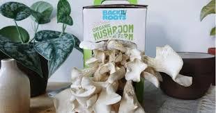 12 best mushroom growing kits to grow