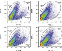 Evaluation of the differentiation status of neural stem cells based on cell  morphology and the expression of Notch and Sox2
