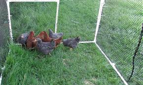 Setup A Mobile Chicken Coop And Free Range Those Birds