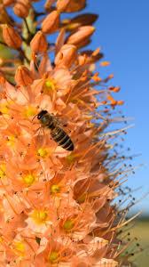 bee close up 4k 8k wallpaper hd