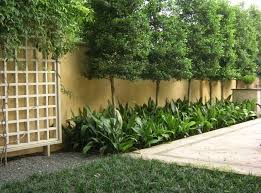 Privacy Trees For Small Yards Torrestreeservicellc