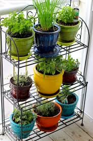 herb garden from an old vegetable rack