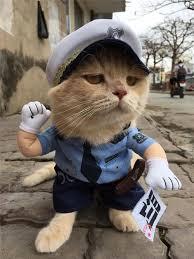 Gặp chú mèo 'hoàng thượng' VN nổi tiếng thế giới - Báo Kiến Thức