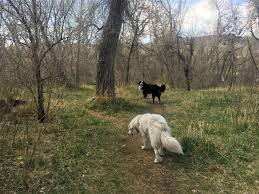 6 Off Leash Dog Parks To Explore In The Denver Metro Area