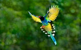 el quetzal images live wallpaper