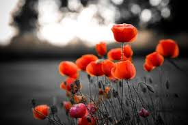 quotes for remembrance day