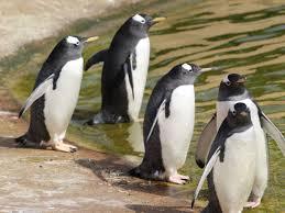 Coronavirus: Edinburgh zoo see surge in ...