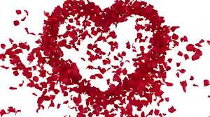 ورود متناثرة على شكل قلب حب 1 Youtube