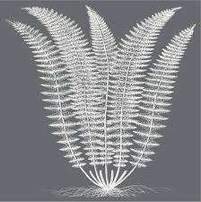 Fern (Gray & Ivory)' Stretched Canvas Print - Botanical Series | Art.com