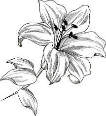 Lily Tattoo Bloemen Stencils Tatoeage Ideeen Lelie