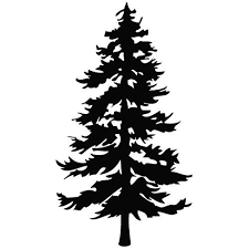 Tree Evergreen Plant Decal Vinyl Car Wall Laptop Cellphone Sticker Wow I Love This Check Vinyl Tree Wall Decal Metal Tree Wall Art Evergreen Tree Tattoo