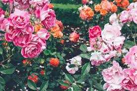 3 portland rose gardens to visit