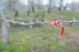 71 Barbed Wire Fence Ribbon Photos Free Royalty Free Stock Photos From Dreamstime