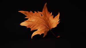 autumn leaf black background 4k
