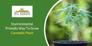 grow cans plant