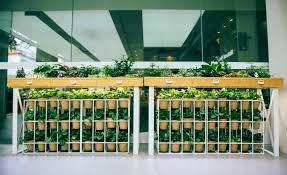 Premium Vertical Gardens Vertical Green