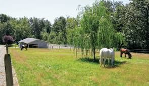 Creating The Perfect Horse Paddock Expert Advice On Horse Care And Horse Riding