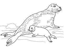 Grijze Zeehond Moeder En Baby Kleurplaat Gratis Kleurplaten Printen