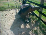 Horserail Safe Flexible Horse Fencing Manufacturer Horserail Com