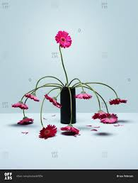 wilting flowers in a vase stock photo offset