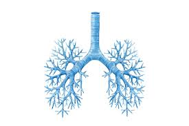 Airway Clearance Therapy for Patients with COPD   RT