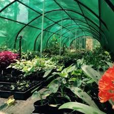 start a backyard plant nursery business