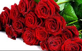 rose flower wallpaper free